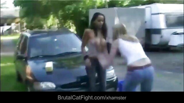 बिल्ली झगड़े अश्लील
